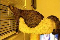 Gatos dormindo em lugares estranhos
