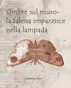 POESIE SULL'ALBERO: Falena