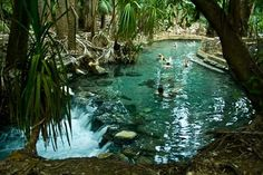 A great place for a swim in a natural thermal pool! Mataranka Hot Springs, Northern Territory Australia