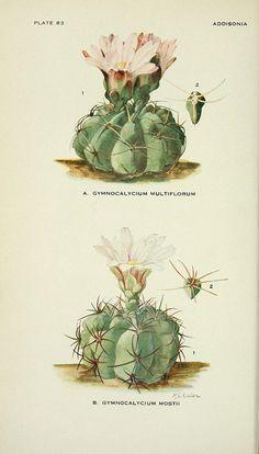 Ilustraciones botánicas free