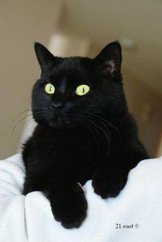 Black beauty. Black cats bring good luck & l<3ve.