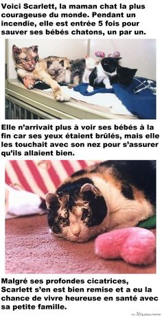 Awwwww, heartbreaking, but true to a mothers nature- saved All her babies from a burning building. I Love Cats, Crazy Cats, Chat Kawaii, Cat Shaming, Scarlett, Super Cat, Stop Animal Cruelty, Small Cat, Cat People
