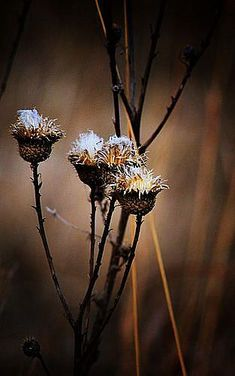 ~ Autumn Brown Whispers ~