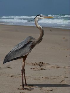Vero Beach, FL!...Sooo Much Amazing Beauty!..;-)