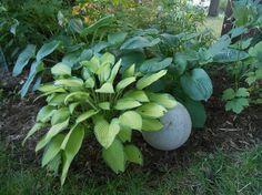 Recycle a Flat Basketball to Create a Hypertufa Garden Orb