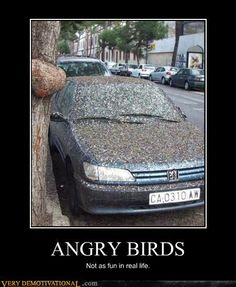 Angry birds not a game in real life