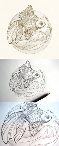 Ryukin Goldfish sketch by Catherine Noel