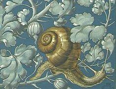 Anton Seder - Art Nouveau print Art Pictures, Art Images, Snail Art, Art Nouveau Illustration, Design Basics, Belle Epoque, Sea Creatures, Home Art, Vintage Art