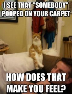 LOL - priceless - funny cats