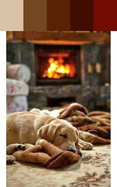 Snuggle Puppy Palette