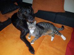 Hunde Foto: Nadine und Fussel - Meine Katze Hier Dein Bild hochladen: http://ichliebehunde.com/hund-des-tages  #hund #hunde #hundebild #hundebilder #dog #dogs #dogfun  #dogpic #dogpictures