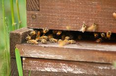 Storm King Art Center to Host a Honey Bee Apiary by Artist Peter Coffin Storm King Art Center, Beekeeping Equipment, Backyard Beekeeping, Hobby Farms, Bees Knees, Queen Bees, Bee Keeping, Permaculture, Farm Animals