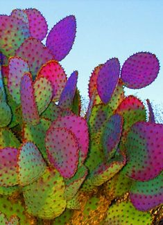 Cacti This is just gorgeous. Great use of colours. www.prosperityvault.com