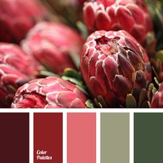 color of blood, color palettes, color selection, color solution for design, dark-red color, green color, green shades, maroon color, olive color, red shades, wine color.