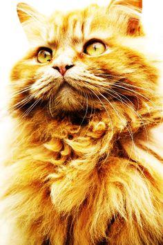 Propaganda cat - orange theme - Day 11 #30DoC @createstuff