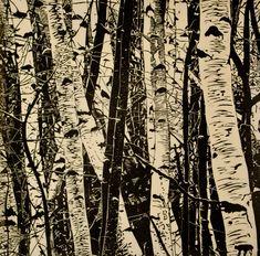 Hannah Skoonberg -Beech trees, if I'm correct. I like the look of them. How often do you really see white bark?