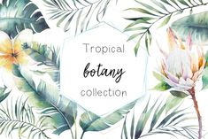 Tropical botany collection by Eisfrei on @creativemarket