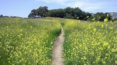 Hiking in Los Angeles: LA's Best Trails