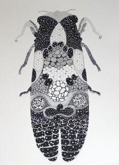 Cricket illustration by Penelope Kupfer