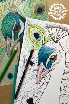 Peacock Coloring Page - to say this animal coloring page is magnificent is an understatement. This is one of the most gorgeous printable coloring pages we've ever seen!