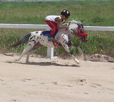 Its a mini jockey on a mini horse! This is literally the best thing I have ever seen ever.