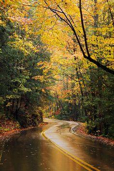"radivs: ""Signal Mountain Fall by Virginia Bailey "" Beautiful World, Beautiful Places, Beautiful Pictures, Beautiful Streets, Signal Mountain, Exotic Plants, Beautiful Landscapes, The Great Outdoors, Natural Beauty"