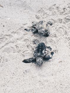 Witness baby turtles launch to the world