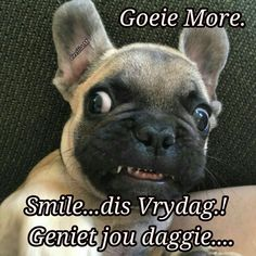 Goeie Nag, Goeie More, French Bulldog Puppies, Dogs, Afrikaans, Mornings, Animals, Messages, Quotes