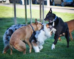15 things humans do wrong at dog parks-- Mother Nature Network