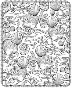 Shells to color