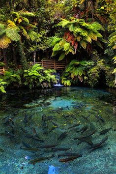 Jungle garden pond, something like this in the yard or nearby would be awesome!