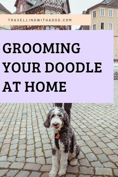 Dog grooming requires certain tools and products. Here's how you can DIY you… Dog grooming requires certain tools and products. Here's how you can DIY your doodle grooming at home to stretch time between grooming visits. You Doodle, Doodle Dog, Goldendoodle Grooming, Goldendoodle Haircuts, Dog Grooming Tips, Pet Tips, Pet Shampoo, Dog Facts, Puppy Face