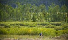 Tons of great biking trails near Winter Park, CO.