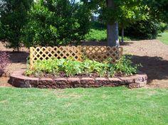 slightly raised garden bed