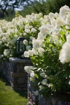 Planter in stone wall: Landscape Winner: Janice Parker Landscape Design - Connecticut Cottages & Gardens - July 2012 - Connecticut Hortensia Hydrangea, Limelight Hydrangea, Hydrangea Paniculata, Beautiful Gardens, Beautiful Flowers, Exotic Flowers, Landscape Design, Garden Design, Landscape Plans