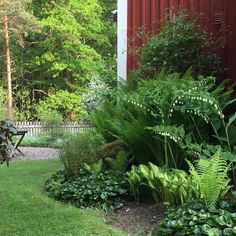 "40 gilla-markeringar, 3 kommentarer - Åsa Nilcrantz (@asanilcrantz) på Instagram: ""Skuggsidan i trädgården med #jätterams #hasselört #bräken #funkia #summersnow "" Part Shade Plants, Shade Flowers, Garden Landscape Design, Gras, Garden Cottage, Shade Garden, Dream Garden, Garden Planning, Garden Paths"