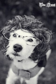 [#Animals wearing glasses, #Dog] Secretary Porter by The Road Photography, via Flickr dogs in wigs