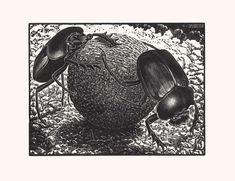 Maurits Cornelis Escher Scarabei aprile 1935 xilografia a legno di testa cm 18,00 x 24,00 Collezione Federico Giudiceandrea