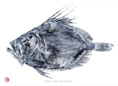 Cornish John Dory Fish Rubbing by Padstow artist Susie Ray