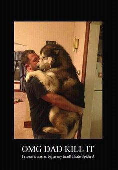 Malamutes are more like people than any dog breed I've ever seen <3...this is so our dog! Lol