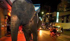 Morte de turista chama atenção para abusos no turismo animal