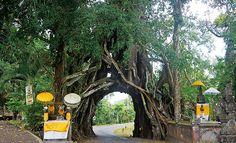 Daftar Tempat Wisata di Negara Bali - Bunut Bolong