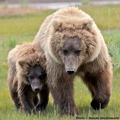 Help Protect Wildlife Stop This Anti-Wildlife Assault on Capitol Hill......Add your daily free click to fund this and other important projects !!!
