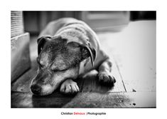 Murphy... - My dog exercising his main activity: taking a nap.   Captued in RAW and edited in LR Classic CC and PS CC with CEP4 and SEP2