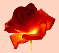 fiori.gif (GIF kép, 480×435 képpont)