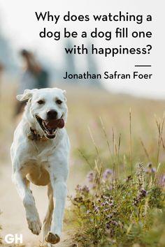 Jonathan safran foergoodhousemag dog quotes funny, dog memes, funny dogs, i Best Dog Quotes, Dog Quotes Funny, Dog Memes, Funny Dogs, Puppy Quotes, Cute Animals With Funny Captions, Cute Animals Puppies, Funny Animals, Animal Memes