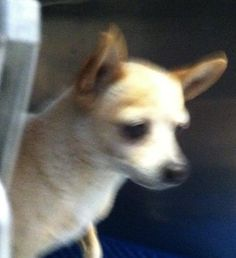 35663624 located in El Paso, TX, to be destroyed 7/16/17