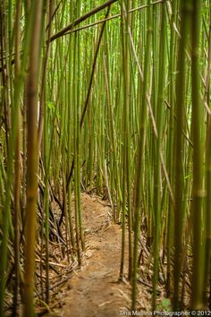 Bamboo Forest Hike