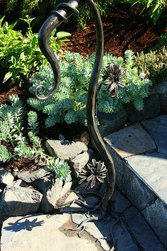 Wrought iron railing & succulent bed. Love the root base of the railing!