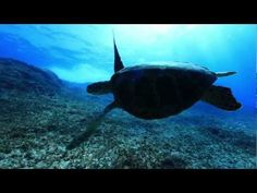 #Tinian island,CNMI  Fleming point.  Diving video - absolutely beautiful - makes me miss the Marianas